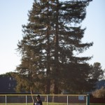 Big Tree, Little Fielder